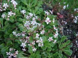 Shrub Small White Flowers - naturally beautiful nature at her best
