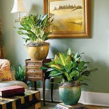indoor plants living room home design ideas