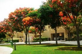 landscaping companies in dubai landscape maintenance companies in