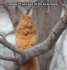 Squirrel Meme - funny waiting squirrel meme i guess i ll just wait til the birds