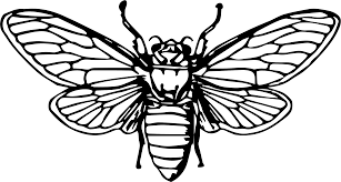 clipart cicada