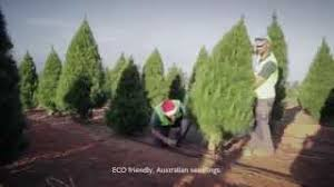 cheap real trees cheap size of