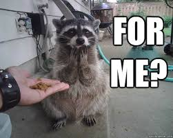Racoon Meme - grateful raccoon memes quickmeme