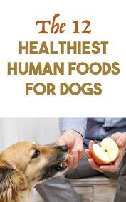 best 25 human food for dogs ideas on pinterest what to feed