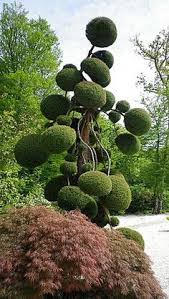 Topiary Cloud Trees - double spirals shape it topiary pinterest spiral topiary