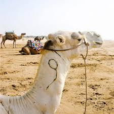travel photography moroccan artwork beach print clair estelle 25 02 travel photography moroccan artwork beach print