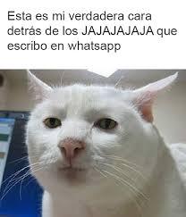 Gato Meme - 15 memes de gatos y perros que te har磧n el d祗a