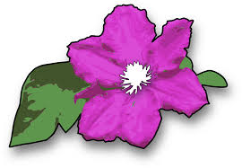 free vector graphic flower purple violet green free image on