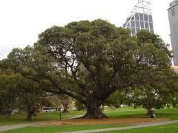 australian native plants ultimate plants buyers guide u0026 list