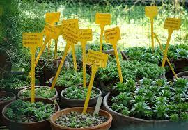 seven ideas to steal from italian botanical garden hometalk