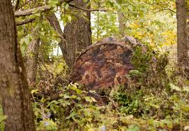 Ground Blinds For Deer Hunting Hunting Blinds Blain U0027s Farm U0026 Fleet Blog