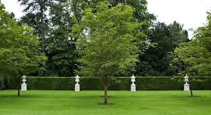 ornamental tree pruning elite tree service portland oregon