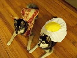 Pet Halloween Costumes Dogs 139 Halloween Pets Images Animals Pet