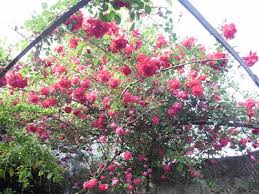 imagenes de feliz sabado vintage mi jardín vintage
