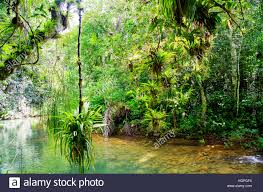 topes de collantes national park sierra escambray cuba stock photo