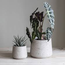 garden pots australia photo album cement plant pot set of two by idyll home notonthehighstreet com