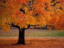fall lessons tes teach