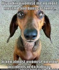 Weiner Dog Meme - dog shaming dachshund dog dachshunds and meme