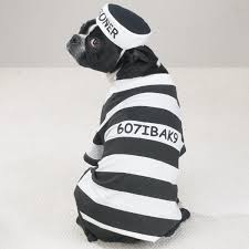 Halloween Jail Costumes Prisoner Halloween Dog Costume Jail Dog Costumes