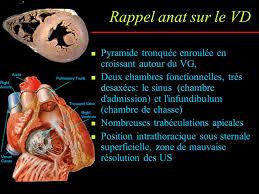 chambre d h es dr e l exploration échocardiographique du ventricule droit en routine