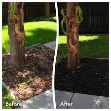 Before And Afters Clients Paint by Endurant Professional Mulch Colorant Now Available For Home