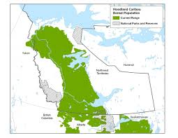 Canada Territories Map by Boreal Caribou Nwt Species At Risk