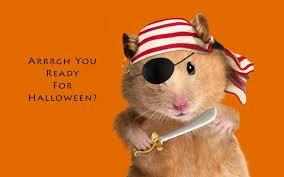 Halloween Meme - happy halloween memes 2017 happy halloween pictures 2017