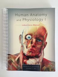 Visual Anatomy And Physiology Pdf Human Anatomy And Physiology I Laboratory Manual Rebecca V