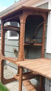 Outdoor Kennel Ideas by Best 25 Outdoor Cat Run Ideas On Pinterest Outdoor Cat
