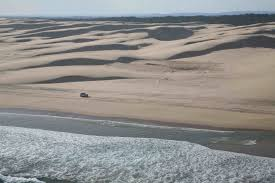 native plants grow on the sand dunes at this beach stock photo stockton beach camping and 4x4 access what you need to know