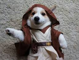 in costumes 199 best critters in costume images on animals pet