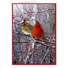 cardinal greeting cards zazzle