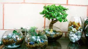 ozziesterrariums your personalized little gardens in glass