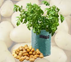 Patio Potato Planters Potato Planter Crazysales Com Au Crazy Sales