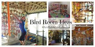 pet room ideas bird room ideas are addictive you have been warned spiffy