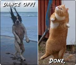 Dancing Dog Meme - reigning cats and dogs meme anonamos3021