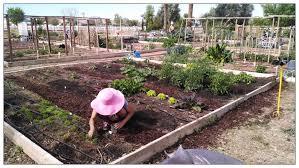 crafty design ideas gardening in arizona incredible decoration