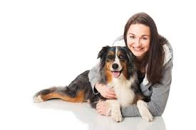 owning a australian shepherd 10 things you should know before owning an australian shepherd
