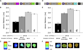 binary 2in1 vectors improve in planta co localization and dynamic