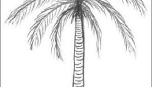 how to draw acacia tree step by step easy video tutorial for