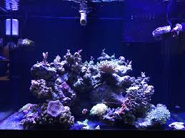 sb reef lights review review on sb reef lights page 2 reef2reef saltwater and reef