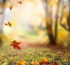 Fall Autumn by Falling Autumn Leaves Background Stock Photo Picture And Royalty