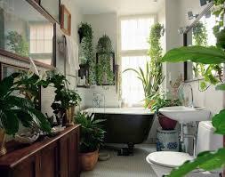 apartment plants best plants that suit your bathroom fresh decor ideas