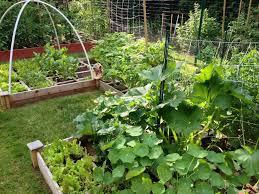 if i plant it it will grow u2013 learning as i grow pasta princess