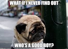 Funny Pug Memes - 8 funny pug memes what every dog deserves