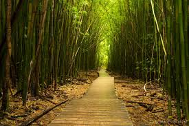 Hawaii natural attractions images The 17 most incredible natural attractions in hawaii jpg