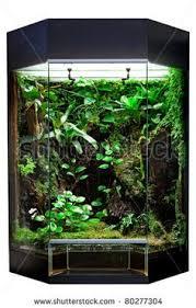 rainforest vivarium the o u0027jays dragons and vivarium