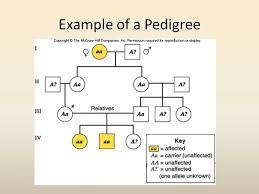 unit 6 pedigree analysis youtube