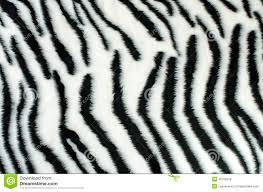 zebra pattern free download black and white fur zebra pattern stock illustration illustration