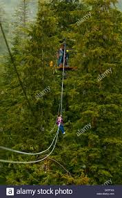 Treetop Canopy Tours by Canopy Tours Stock Photos U0026 Canopy Tours Stock Images Alamy